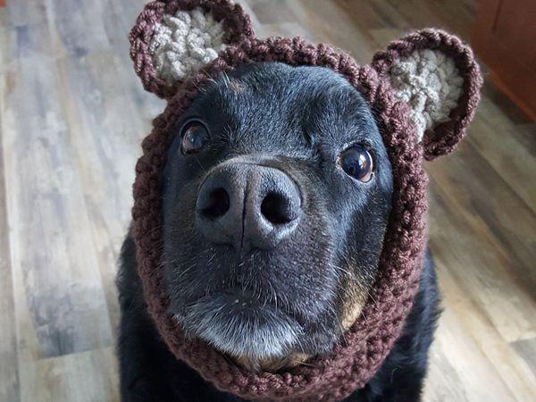 Crochet Doggie Snood Pattern – Share a Patte