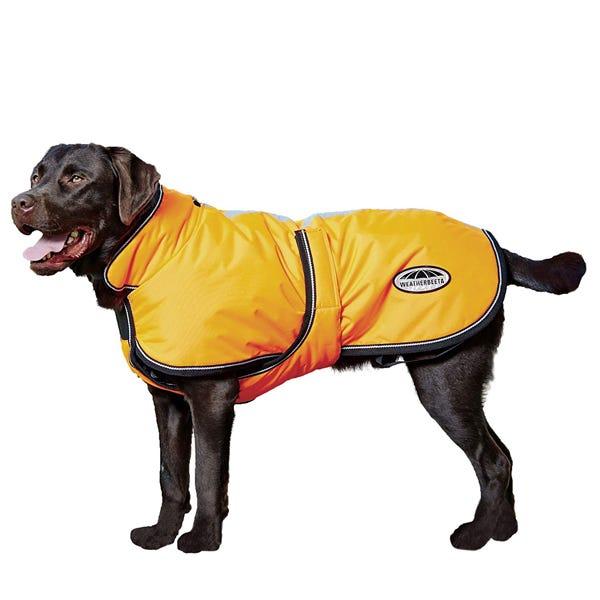 Best snow jackets for dogs in 2020: Hurtta, Ruffwear, Gooby & more .