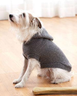 Dog Sweater Knitting Patterns | AllFreeKnitting.c