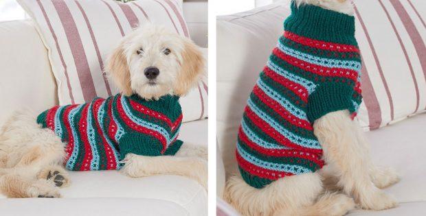 Stylish Knitted Dog Sweater [FREE Knitting Patter