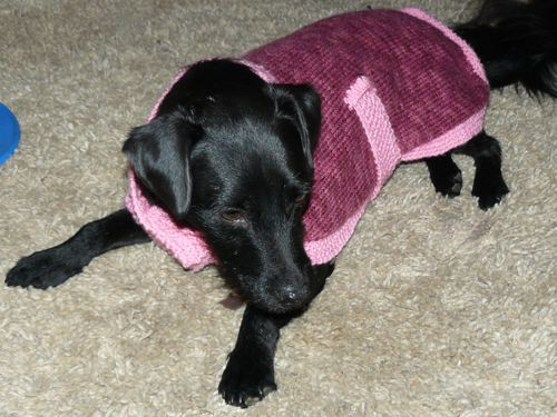 19 Dog Sweater and Coat Free Knitting Patterns | Guide Patter